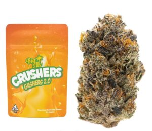 Buy Crushers Gushers Strain By Big Als Exotics | Cookies Maywood